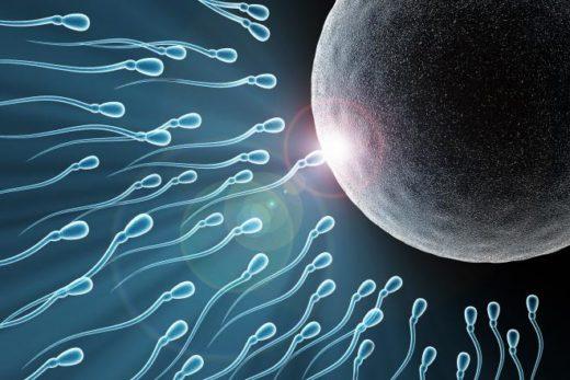 spermi2