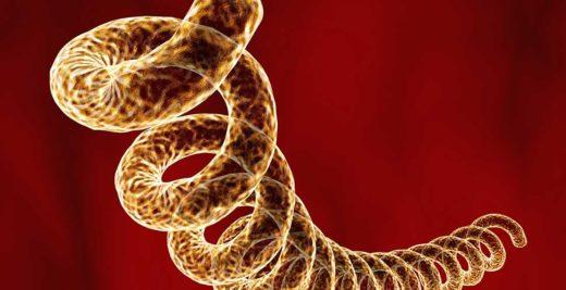 syfilis